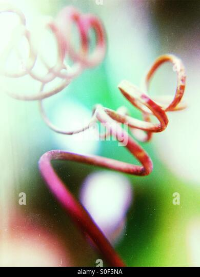 Close up of plant tendrils - Stock Image
