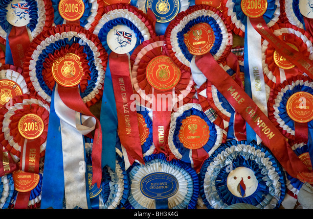 Rosettes Awarded At Cattle Shows - Stock Image