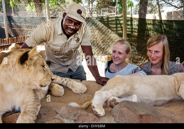 Johannesburg South Africa African Lion Park wildlife conservation woman lion cub Black man staff employee interaction - Stock Image