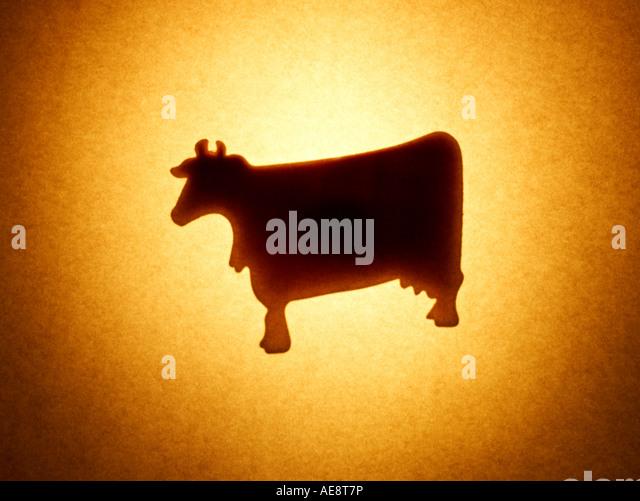 Cow Animal - Stock Image