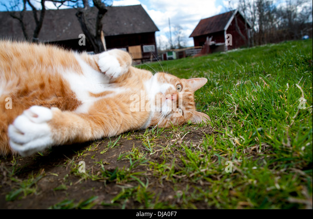 Cat rest on grass - Stock Image