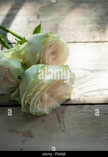 three roses on  wooden table in a patch of sun - Stock Image