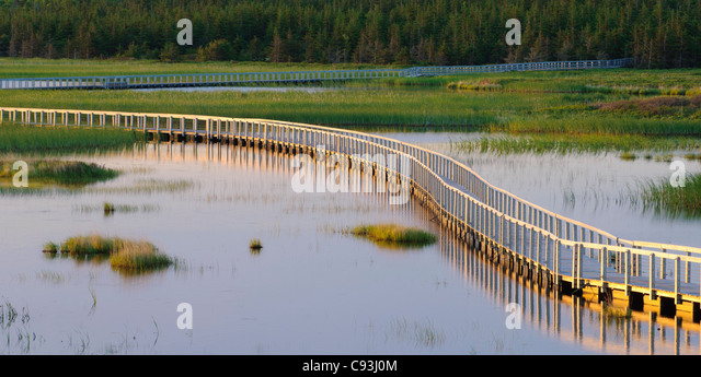 Boardwalk trail across wetlands at Greenwich, Prince Edward Island National Park, PEI, Canada. - Stock Image