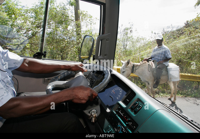 BVI Tortola Road Town Ridge Road Black male tour bus driver donkey rider - Stock Image