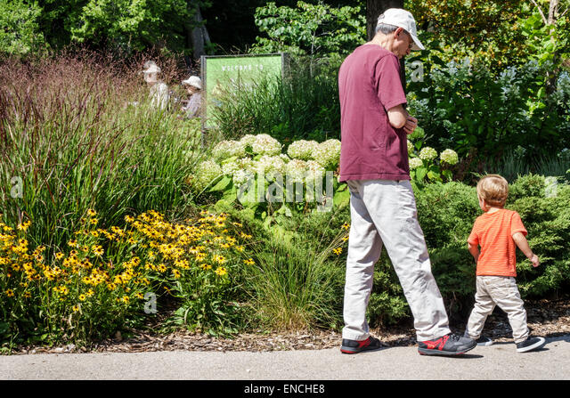Chicago Illinois North Side Lincoln Park public park nature boardwalk flowers black-eyed Susan man boy toddler grandfather - Stock Image