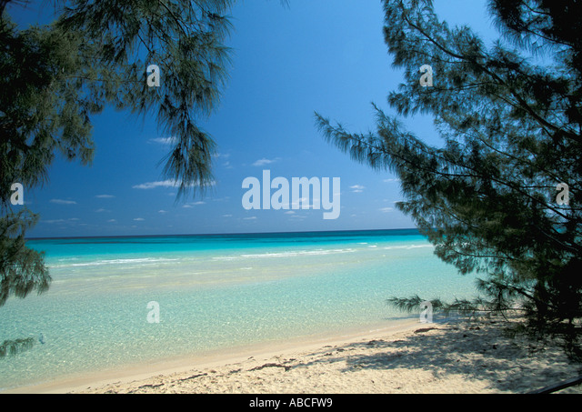 Tropics tropical white sand beach Australian pine trees - Stock Image