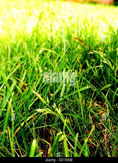 Green Grass. - Stock Image