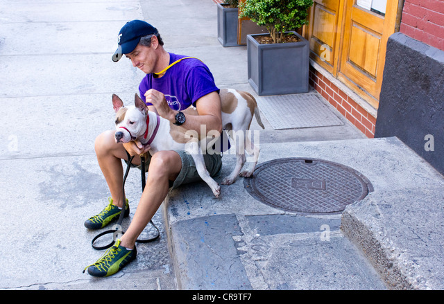 A man volunteer playing with a female pit bull outside Animal Haven, a no-kill shelter  in SoHo, New York City Stock Photo