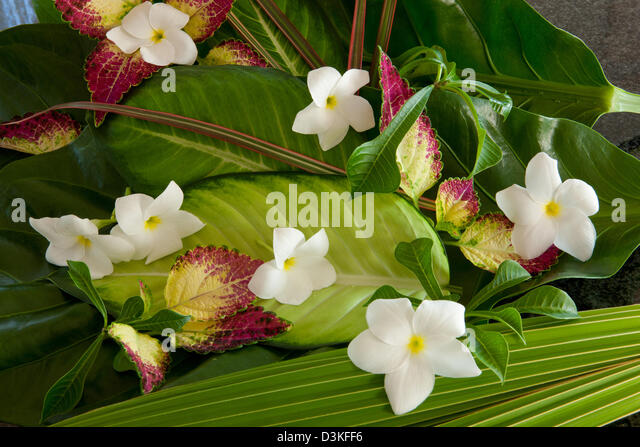 flowers of coconut stock photos amp flowers of coconut stock