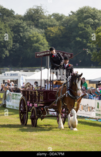 A traditional ale cart and shire horse performing at a county show in England - Stock Image