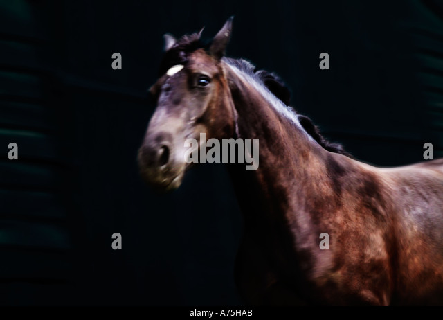 A horse running with a black background - Stock Image