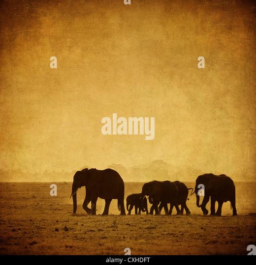 elephant's family - Stock-Bilder