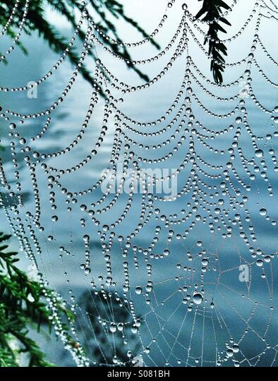 Spider Web in morning dew - Stock Image
