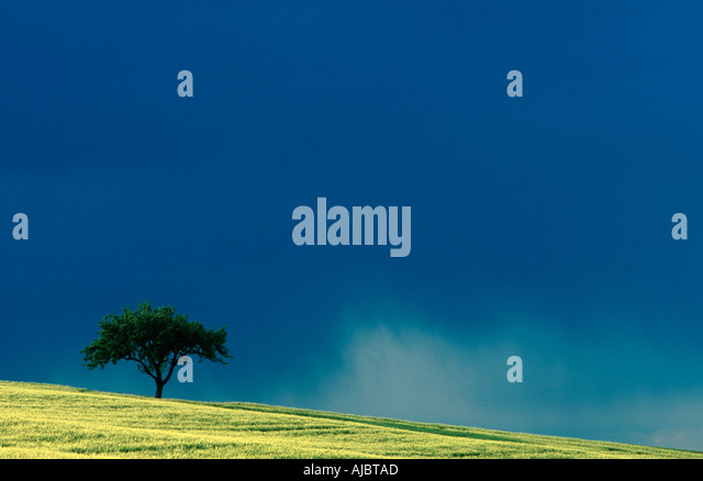 Apple tree arable land stock photos apple tree arable for Domestica in svizzera