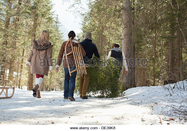 Friends carrying fresh cut Christmas tree in woods - Stock Image