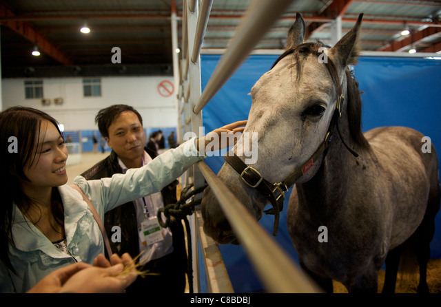 Chinese horse lover touches a horse during China Horse Fair 2011 in Beijing, China.14-Oct-2011 - Stock Image