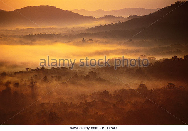 Rainforest at dawn (aerial), Cockscomb Basin, Belize - Stock Image