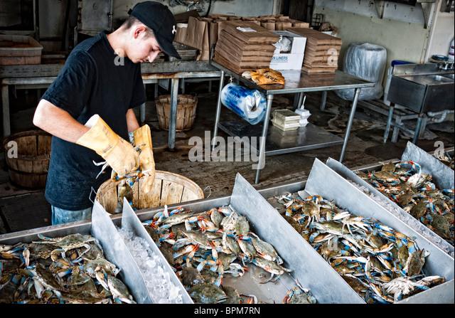 Fish market usa stock photos fish market usa stock for Maine fish market