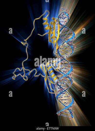 RNA editing enzyme, molecular model. This enzyme binds to double-stranded RNA (ribonucleic acid). - Stock Image