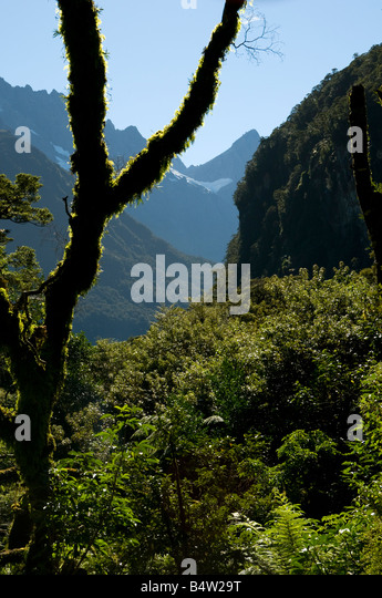 In the Cleddau Valley on the road to Milford Sound, Fjordland, South Island, New Zealand - Stock Image