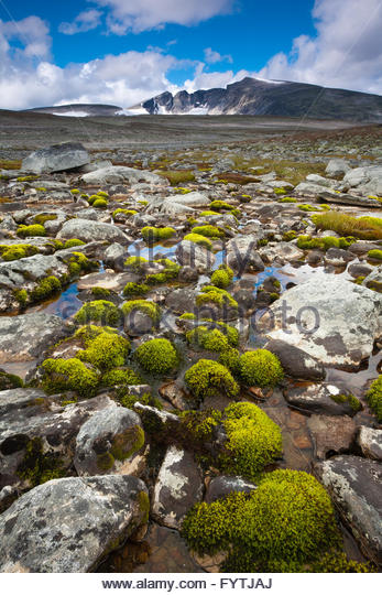 Green moss and rocks in Dovrefjell national park, Norway. - Stock-Bilder