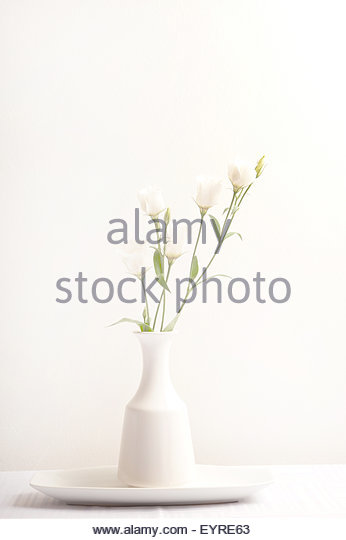 minimalist white vase with white flowers against white wall - Stock Image