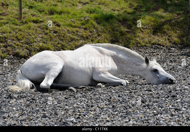 Horse lying stock photos images alamy
