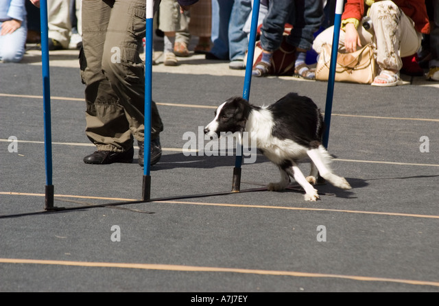 Dog Obedience Training Warsaw In