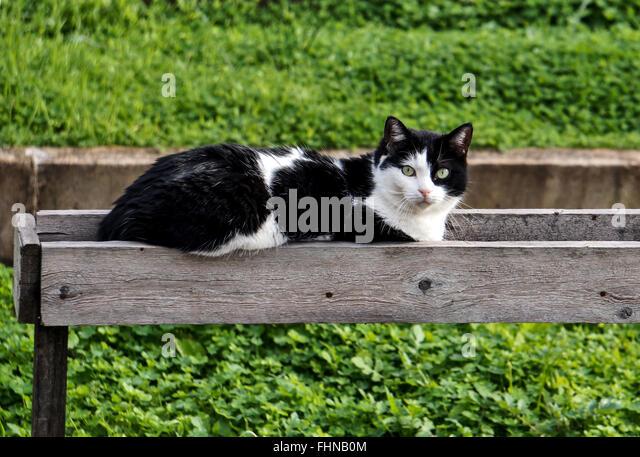 Cute Cat Is Sitting On Wooden Windowsill