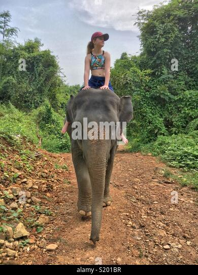 Young girl riding an elephant - front on - Stock Image