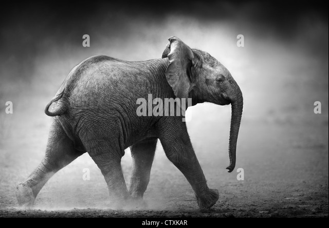 Baby Elephant running in dust (Artistic processing) Etosha National Park - Namibia - Stock Image