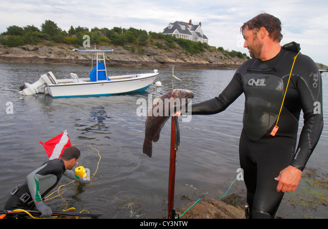 Rhode Island Newport Ocean Drive Ten Mile Drive Ocean Avenue Goose Neck Cove man spearfishing tautog fish hunting - Stock Image