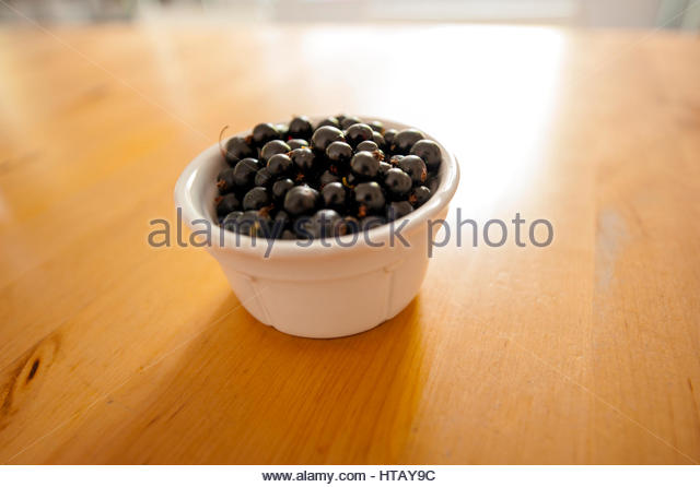 The blackcurrant has the antioxidant Anthocyanin, a member of the flavonid group,which has ability to protect against - Stock Image