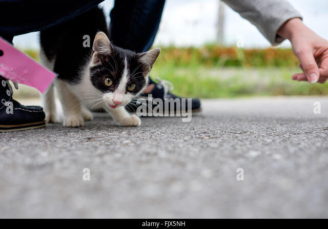 Portrait Of Cat On Street With Woman - Stock Image