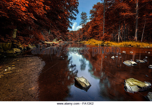 Dense forest with red leaves and a beautiful lake with cloud and tree reflections in North Connecticut - Stock Image