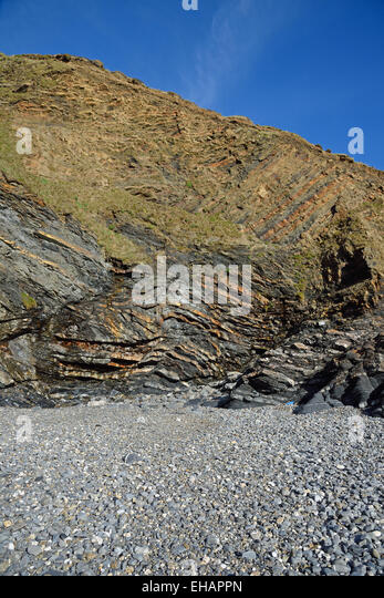 Folding in the cliffs at Pencannow Point , Crackington Haven, near Bude, Cornwall, UK - Stock Image