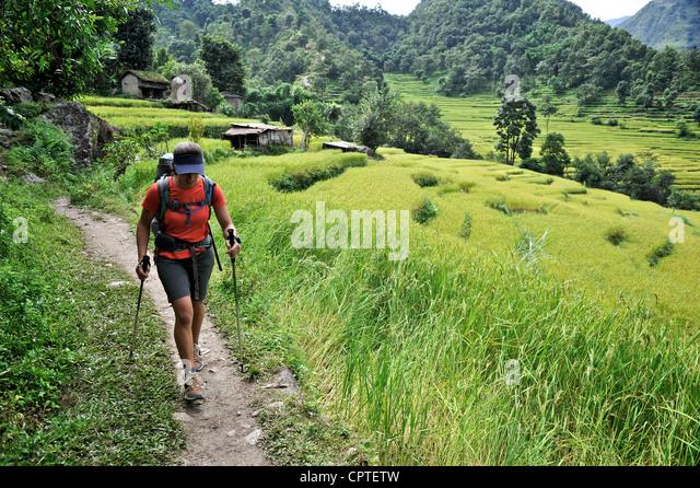 Woman treks along the trail through rice terraces, Bahundanda, Nepal - Stock Image