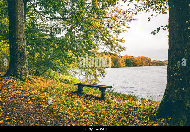 Autumn landscape with a small wooden bench near a lake surrounded by trees in autumn colors in october - Stock Image