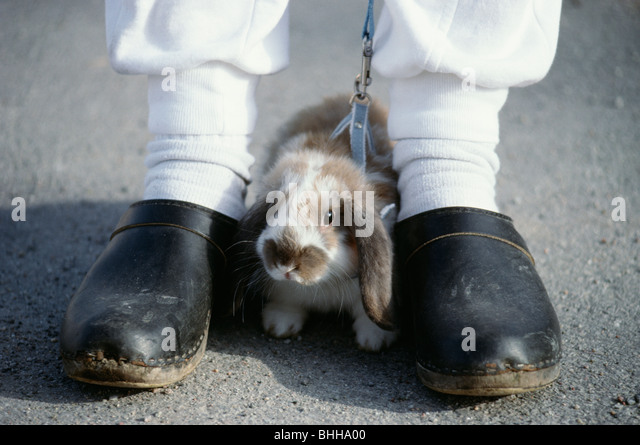 A rabbit in leach, Sweden. - Stock Image