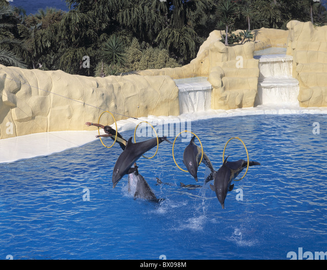 dolphins dolphin's show Canary islands isles Loro Parque Puerto de la Cruz rings Spain Europe jump Tenerif - Stock Image