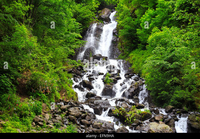 River in Caucasus mountains, near lake Ritsa, Abkhazia, Georgia - Stock Image