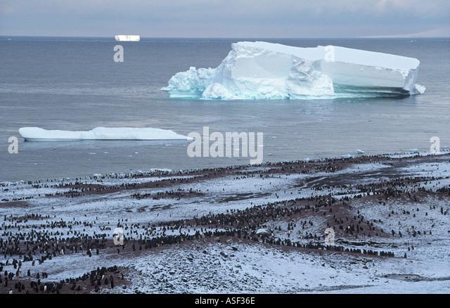 Quintessential Antarctica Large Adelie penguin colony snow icebergs coastline Cape Bird Ross Island Antarctica - Stock Image