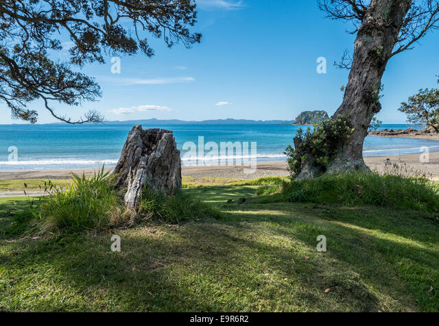Trees and coastline, Port Jackson, Coromandel Peninsular, New Zealand - Stock Image
