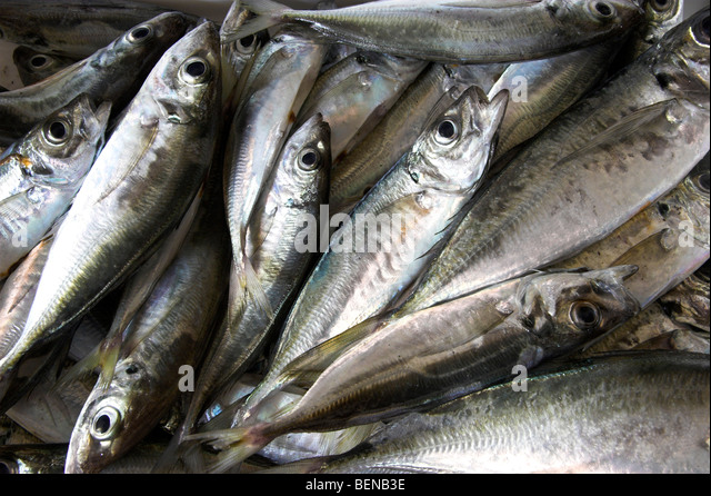 Picture of fresh fish picked recently from the ocean - Stock Image