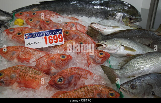 Ocean perch stock photos ocean perch stock images alamy for Ocean perch fish