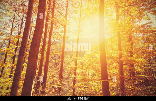 Retro toned picture of autumnal forest at sunset. - Stock-Bilder