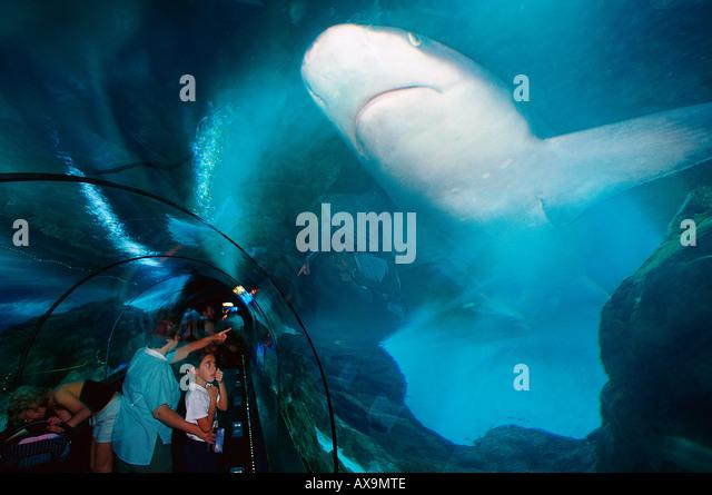 Aquarium, Sharks, Loro Parque, Puerto de la Cruz, Tenerife, Canary Island Spain - Stock Image