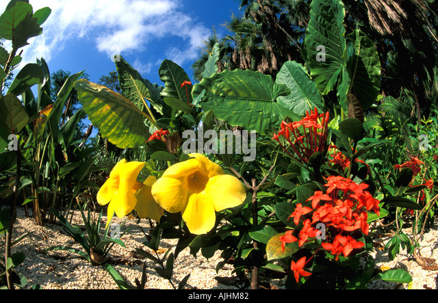 Belize Central America tropical flowers plants - Stock Image