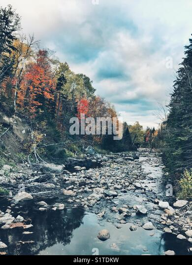 Autumn trees along the stream - Stock Image