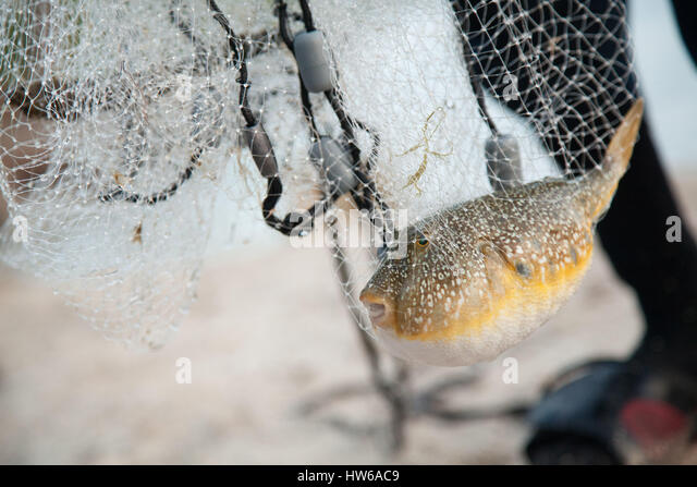 Fish in net - Stock Image